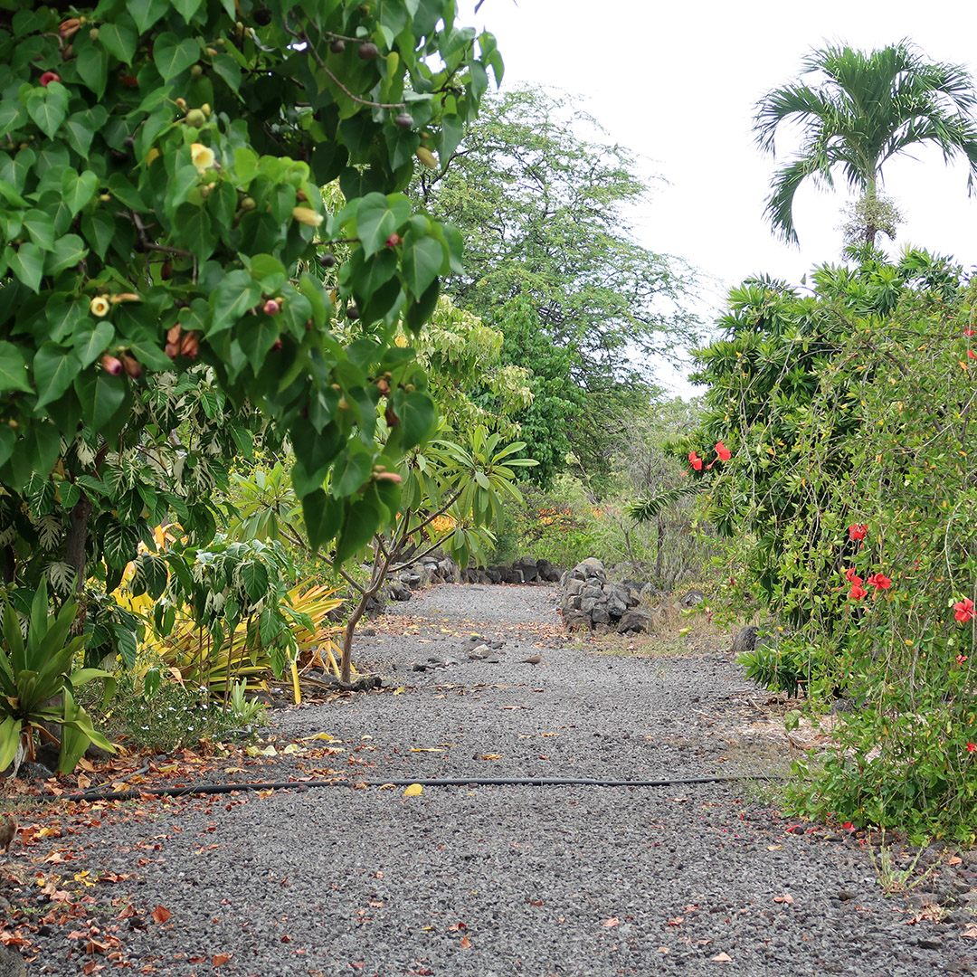 walking path kona