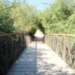Rancho San Antonio County Park hiking trails in Cupertino