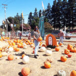 Family day at the Pumpkin Patch